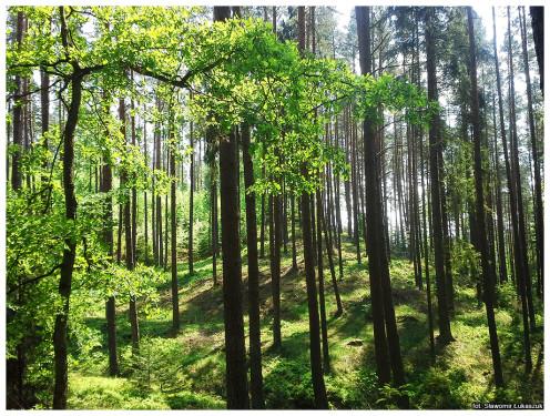 Słowiński Park Narodowy – skarbem przyrody